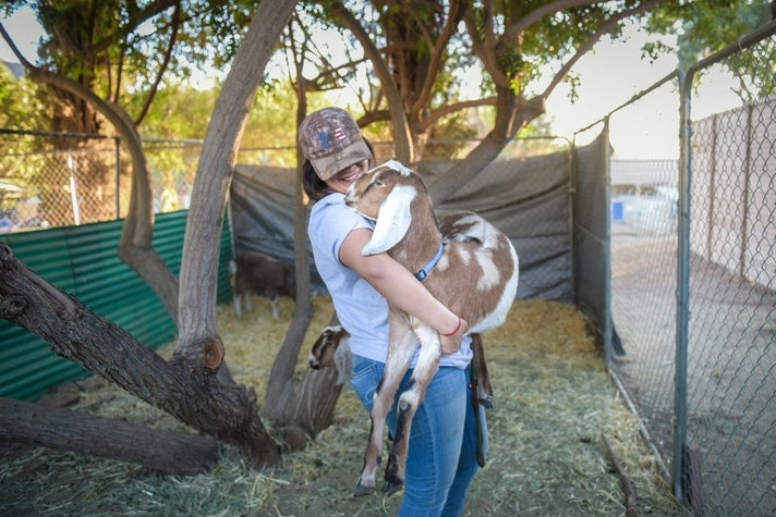 Rescued goat at Humane Society of Ventura County