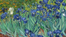 """Irises"" by Van Gogh at the Getty Center"